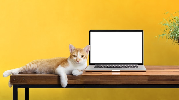 Gatto che si siede con il computer portatile in bianco sulla tavola di legno isolato su bianco