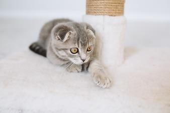 Gatto che si trova vicino al tiragraffi