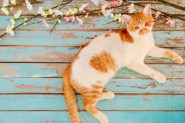 Gatto con fiori di ciliegio su fondo in legno d'epoca.