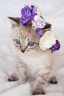 Gatto con gli occhi azzurri in un cesto di fiori