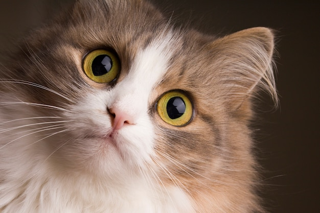 Gatto con gli occhi verdi