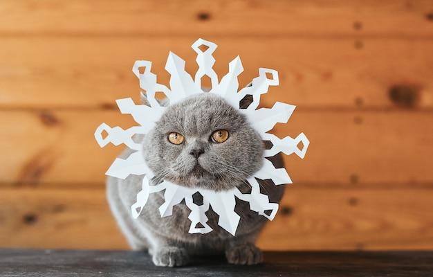 Gatto con un fiocco di neve di carta sul viso. gatto grigio con gli occhi gialli nell'immagine di un fiocco di neve su un fondo di legno.