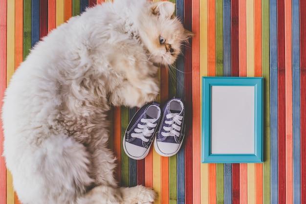 Gatto con un telaio di scarpe da bambino