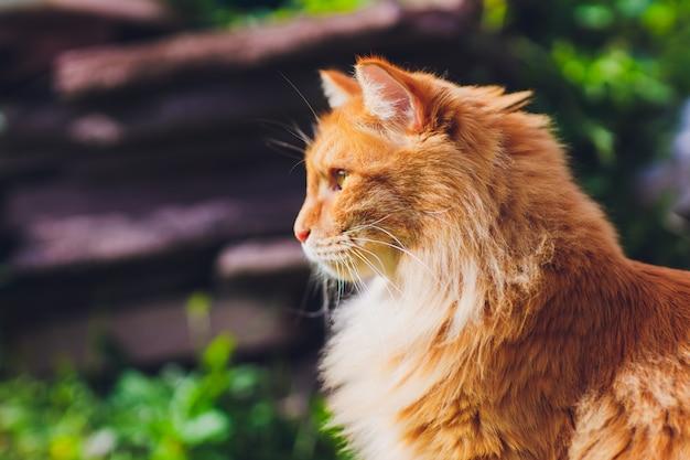 Gatto dagli occhi verdi rosso che riposa sull'erba verde.