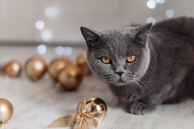 Gatto del bengala su uno sfondo di albero di natale giocando con palline d'oro e giocattoli in cerca di regali.