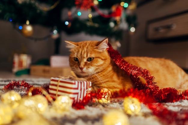 Gatto dello zenzero che gioca con la ghirlanda e il contenitore di regalo sotto l'albero di natale. concetto di natale e capodanno
