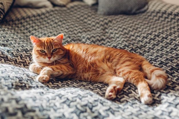 Gatto dello zenzero che si rilassa sullo strato in salone che si trova sulla coperta