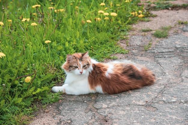 Gatto di 3 colori che cammina nell'erba verde della natura di estate