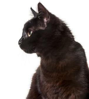 Gatto di razza mista su sfondo bianco