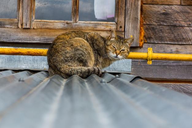 Gatto di strada su un tetto nel villaggio