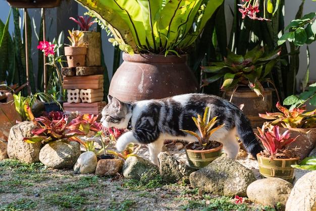 Gatto di tabby sveglio adorabile con i bei occhi gialli sulla sabbia bianca in giardino all'aperto