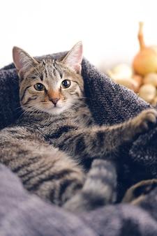 Gatto domestico che si trova in un cestino con una coperta lavorata a maglia.