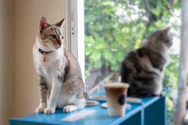 Gatto domestico raffreddato in caffetteria