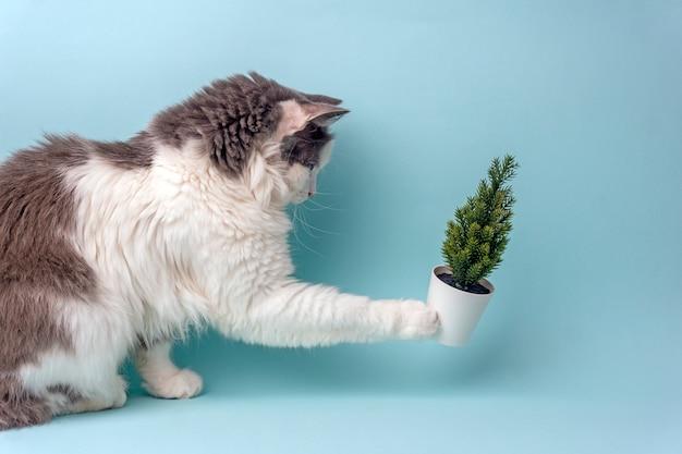 Gatto e albero di natale su una priorità bassa blu.