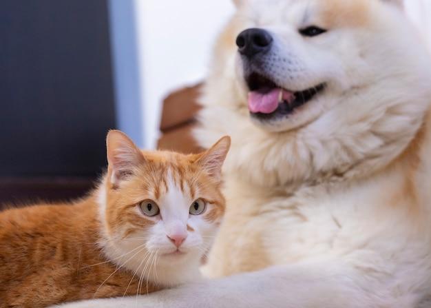 Gatto e cane insieme sul pavimento interno