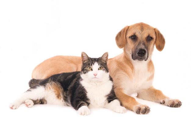 Gatto e cane isolati insieme su sfondo bianco