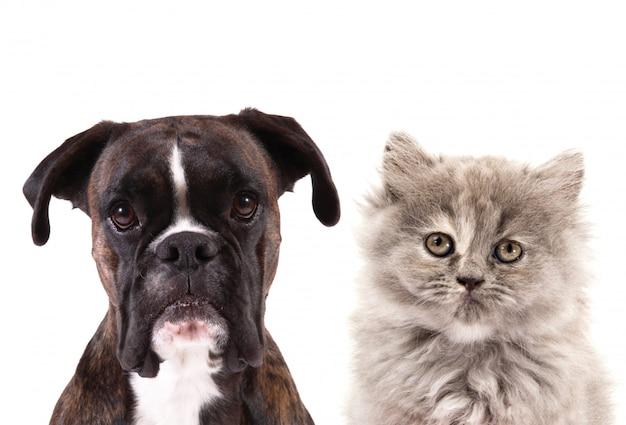 Gatto e cane su bianco