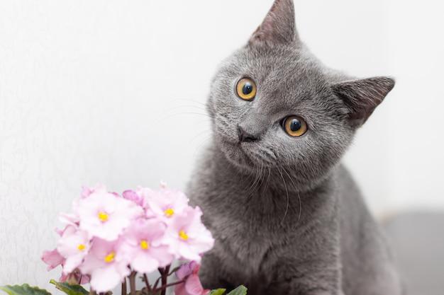 Gatto e fiore domestico in un vaso.