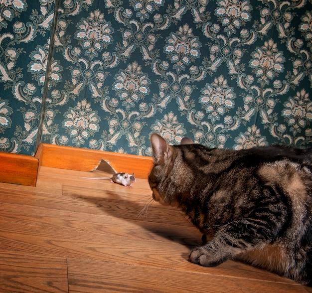Gatto e topo in un lussuoso roon vecchio stile