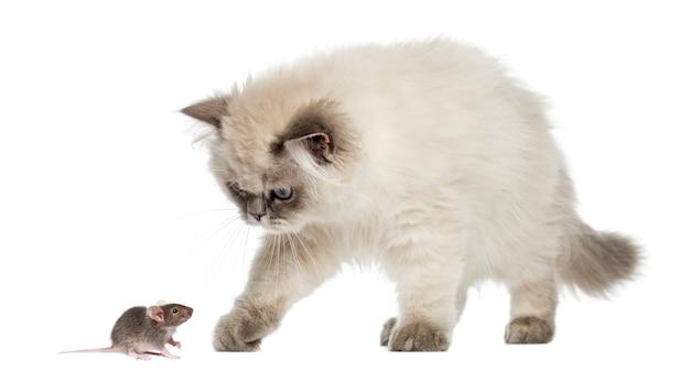 Gatto e topo, isolati