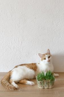Gatto ed erba che puoi mangiare.