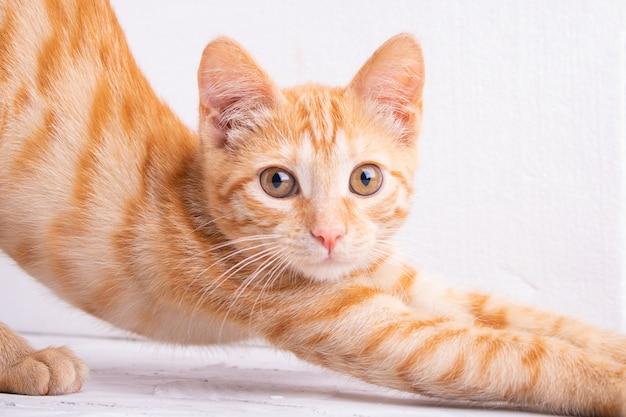 Gatto gattino rosso dopo aver dormito