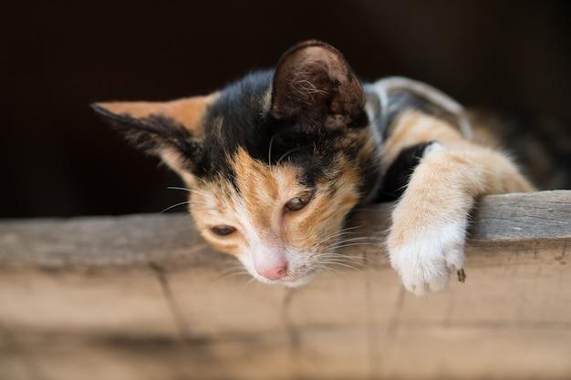 Gatto gattino