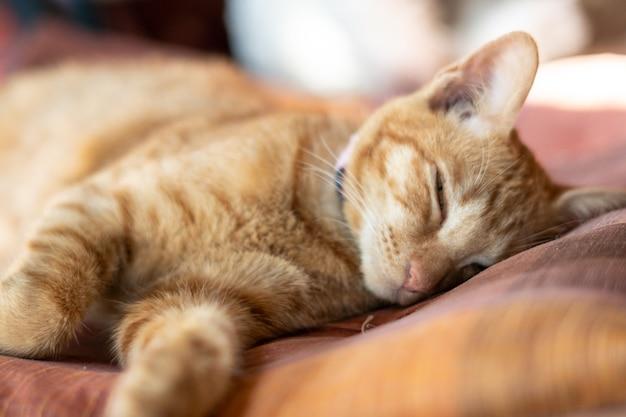 Gatto ginger dormire nel letto accogliente.