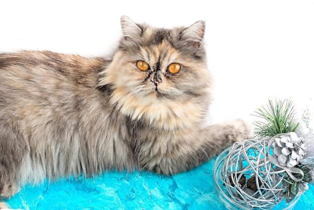 Gatto grigio con occhi gialli e decorazioni natalizie