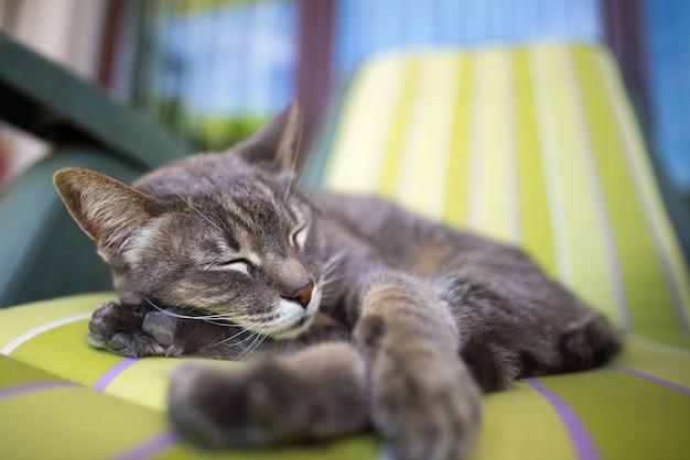 Gatto grigio domestico pigro che si trova da un lato e che fa un sonnellino contorto