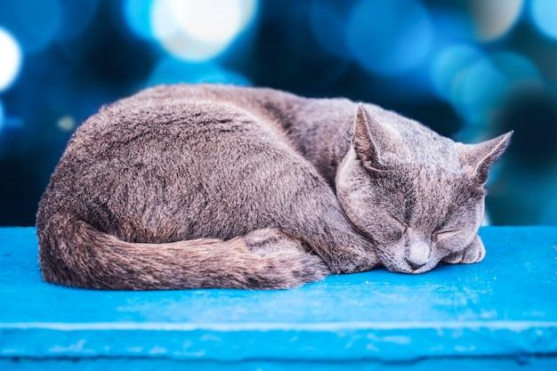 Gatto grigio, dormendo, con bokeh blu