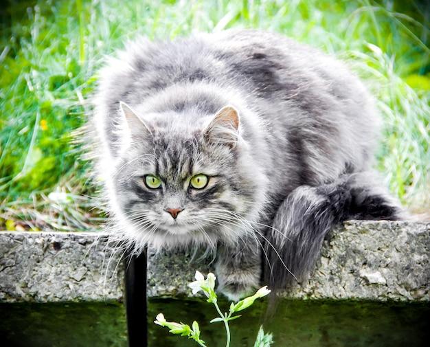 Gatto grigio fumoso seduto sul verde della natura