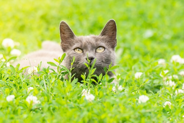 Gatto grigio sull'erba
