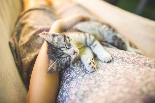 Gatto grigio sveglio che si trova sulle ginocchia del suo proprietario