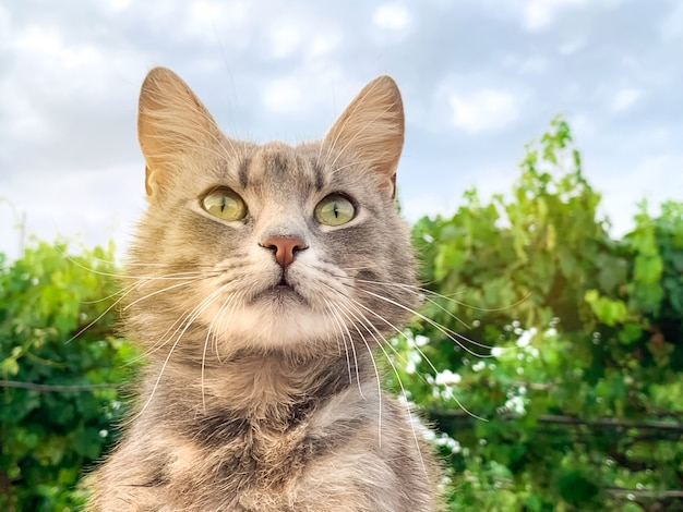 Gatto grigio sveglio su una priorità bassa del cielo blu