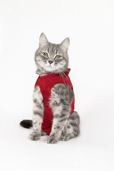 Gatto in coperta medica rossa per i gatti, isolato su bianco
