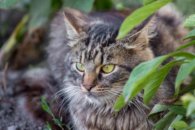 Gatto lanuginoso a strisce con grandi occhi espressivi tra boschetti in giardino