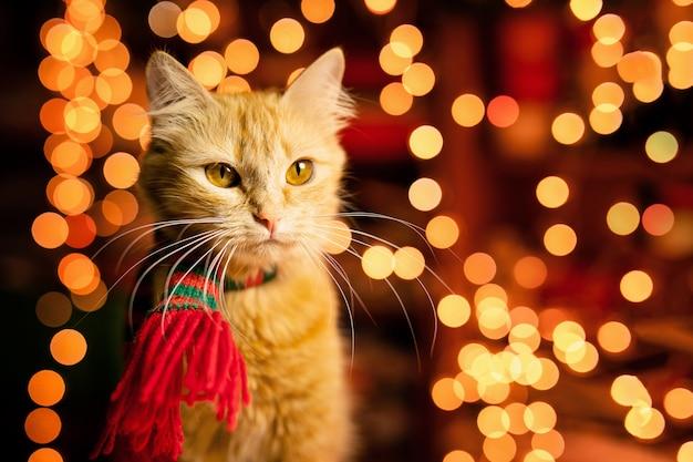 Gatto lanuginoso dello zenzero con bokeh giallo caldo. tema del nuovo anno