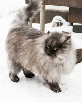 Gatto lanuginoso grigio che cammina sulla neve fuori