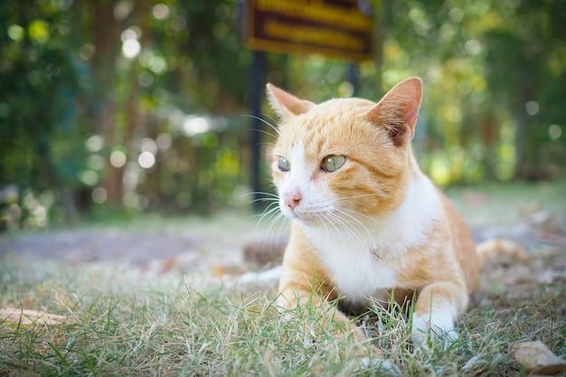 Gatto marrone sveglio su erba verde con priorità bassa vaga del bokeh