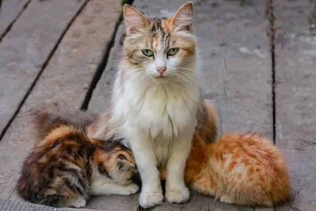 Gatto multicolore nutre due gattini e un gatto seduto