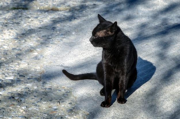 Gatto nero che si siede sulla strada