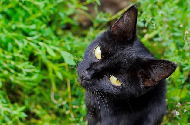 Gatto nero della strega con gli occhi gialli su fondo di erba verde