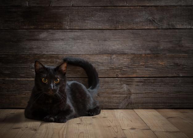 Gatto nero sul tavolo di legno