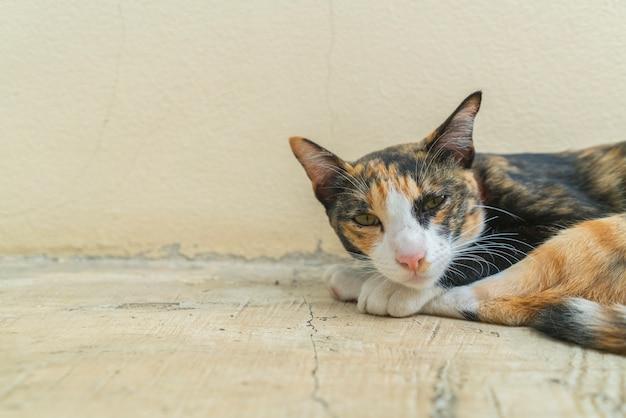 Gatto pigro sdraiato assonnato a terra.