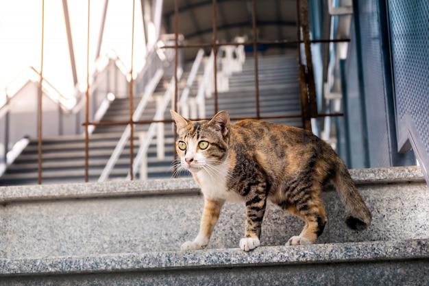 Gatto randagio in città. gatto a strisce marrone
