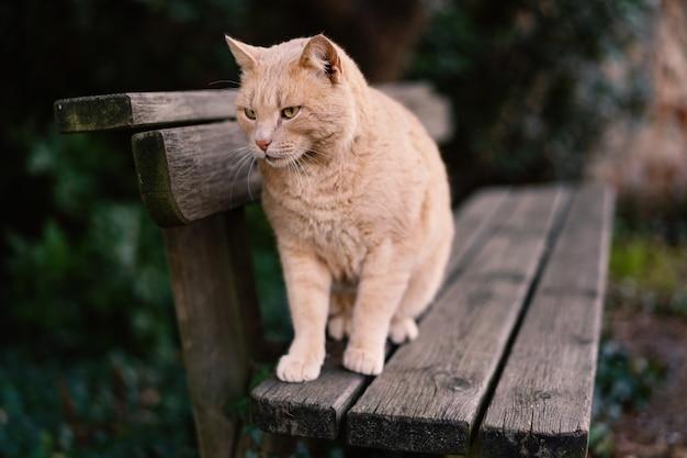 Gatto rosso dei peli che riposa su un banco all'aperto.