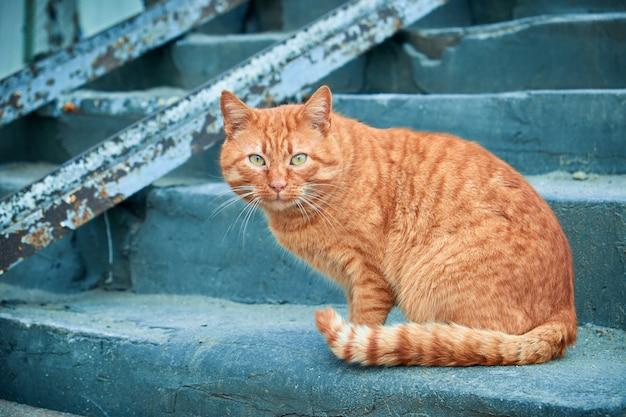 Gatto rosso della via che si siede sulla scala di calcestruzzo