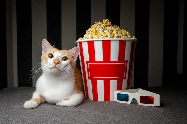 Gatto sdraiato sul divano con popcorn e guardare la televisione, si riposa la sera nella stanza, copia spazio per il testo