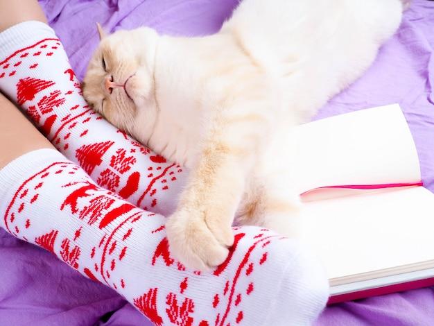 Gatto sdraiato sul divano nel soggiorno decorato per natale, gambe femminili in calze di natale.